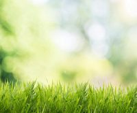 Reasons to Grade Your Lawn