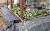 7 Tips for Better Yard Drainage
