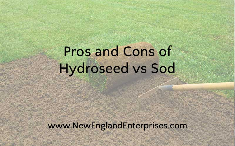 Pros and Cons of Hydroseed vs Sod