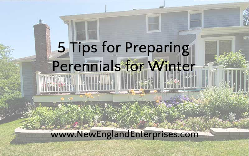 5 Tips for Preparing Perennials for Winter