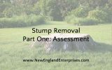 Stump Removal Part One: Assessment