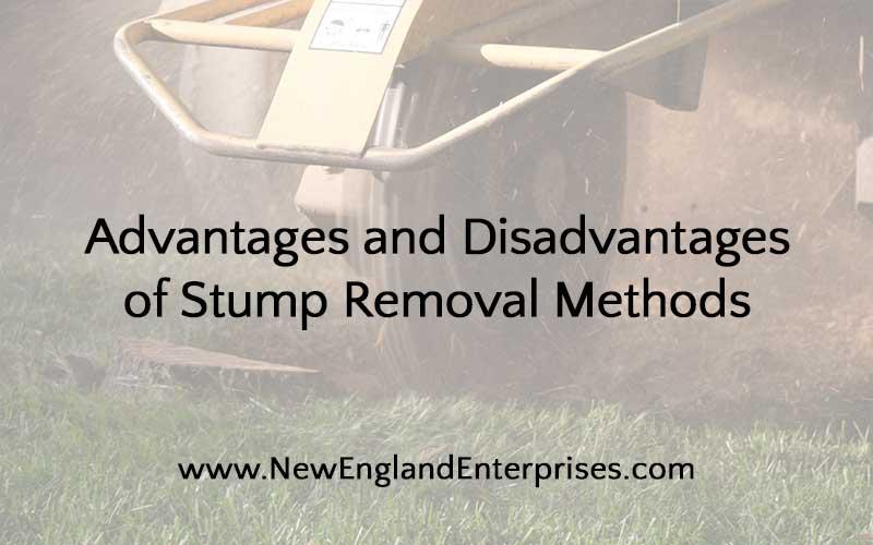 Stump Removal, New England Enterprises, Marlborough, MA