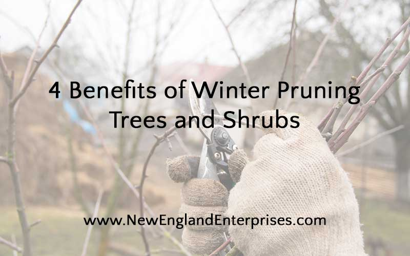 4 Benefits of Winter Pruning Trees and Shrubs